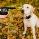 Comprar Collares Electricos Para Perros barato   - Los 20 Mejores