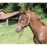 Comprar Material para el cuidado del caballo   al mejor precio - Los 15 Mejores