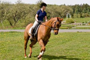 Tu sitio web para comprar Practica equitación con seguridad - Los 8 mejores